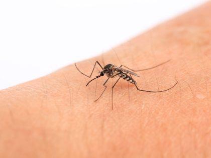 Resenha: repelente contra Dengue, Zika e Chikungunya
